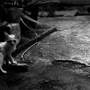 Kitten Looked Back In Dark Corners