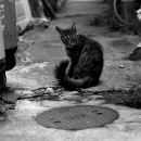 Cat And Manhole @ Okinawa
