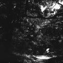 林の中を歩く傘