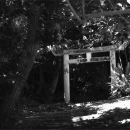Torii In The Woods @ Okinawa