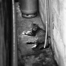 Cat In The Restricted Passage @ Okinawa