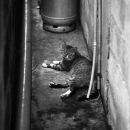 Cat In The Restricted Passage
