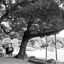 A Couple Walking Between Trees @ Tokyo