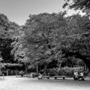 People Relaxing Under The Trees In Rikugien