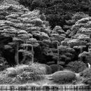 Trees In Rikugien @ Tokyo