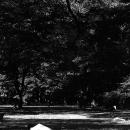 代々木公園の木陰にあった傘