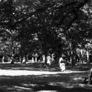 Yong Woman Reading A Book In Yoyogi Park @ Tokyo