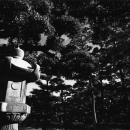 Stone Lantern In Tamamo Park @ Kagawa