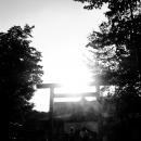 Torii In Yasukuni Jinja And Two Shadows @ Tokyo