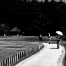 Umbrella On The Winding Path In Korakuen
