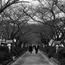 Way To Tsuruoka Hachiman-gu @ Kanagawa
