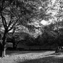 新宿御苑のベンチのカップル
