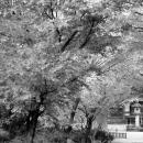 高円寺の石灯籠