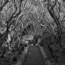 プーシーへ続く階段