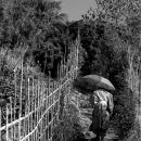 傘を持つ僧侶