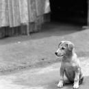 A Sitting Little Dog