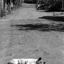 Dog Was Sleeping In The Midst Of The Road @ Laos