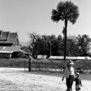 Palm Tree, Mother And Her Son @ Laos