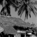 Thatched House And Umbrella