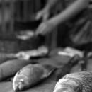 Fishes Sold In The Morning Market @ Laos
