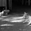 Two Cats Were Lying @ Laos