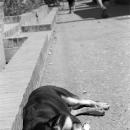 Dog Sleeping By The Wayside @ Laos