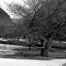 新宿御苑のベンチに座る老夫婦