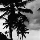 Silhouettes Under The Palm Trees