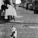 Cat In The Street