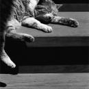 Cat In The Sunny Spot In Jindai-ji