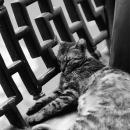 豫園で昼寝する猫
