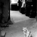 痩せっぽちの猫は見つめる