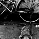 Sullen Dog And Bicycle
