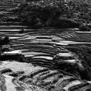 Rice Terrace On The Steep Slope @ Philippines