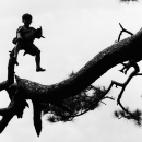 Boy On The Top Of A Tree @ Philippines