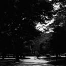 Bicycle In Yoyogi Park