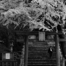 Torii Of Komagome-Inari Jinja @ Tokyo