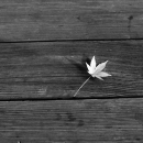 A Leaf On The Bench