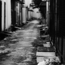 White Cat In The Backstreet @ Malaysia