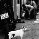 Cautious Cat @ Vietnam