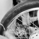 Cat, Wheel And Girl