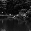 Bridge In Shinjuku Gyoen Park @ Tokyo