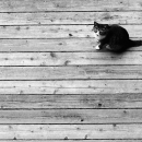 Cat On The Wooden Floor
