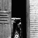 House Dog @ Nepal