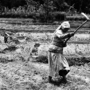 Woman Working In The Fields