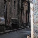 Cat In A Corner Of The Street