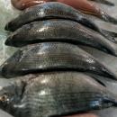 並べられた魚たち