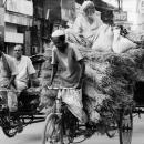 Not Only Human Rides Rickshaw @ Bangladesh