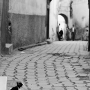 Cat In Medina @ Morocco