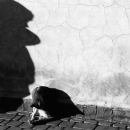 Shadow Of A Boy And Cat